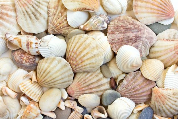 海の貝の背景