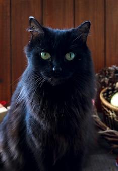 クリスマス新年の黒猫サンタ帽子と幸せな魔法の休日