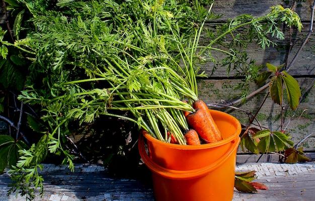 新鮮な野菜のニンジンの庭