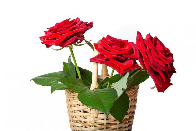 Красные розы в плетеной корзине. свежие цветы