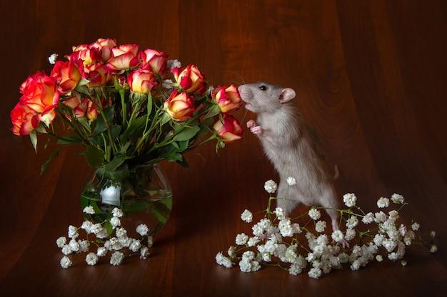 後ろ足の魅力的なネズミは花を嗅ぎます。