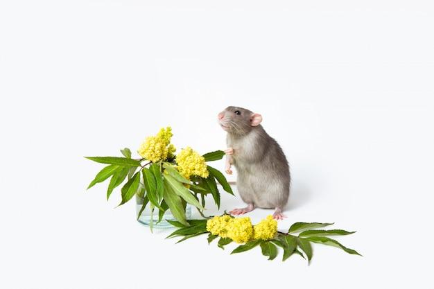 花とかわいいネズミ