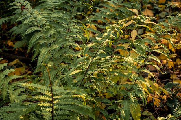 Лесные листья