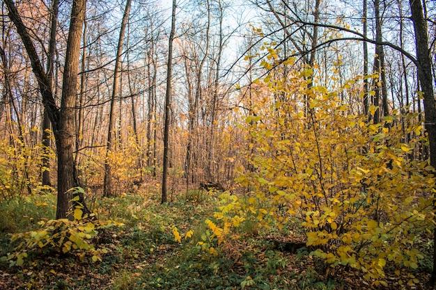 森の葉テクスチャ背景背景秋