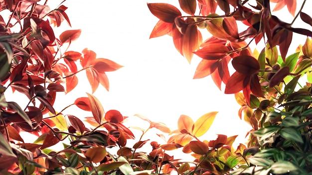 秋の赤と緑の観賞用植物を残す