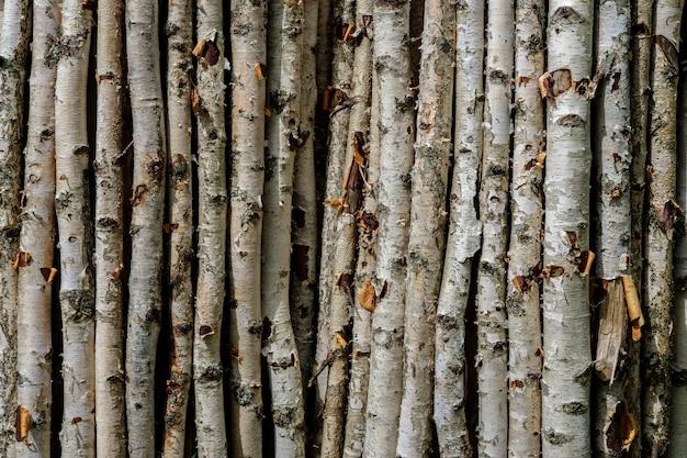 小枝のある乾燥した細い白樺の枝の背景と、樹皮が引き裂かれた場所で、互いに垂直に近くに横たわっています。