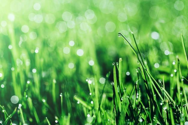 背景の緑の草