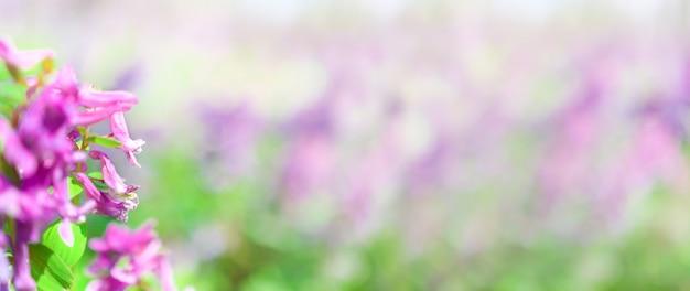 Знамя размытых цветов в лесу и пурпурных с оттенками розовых цветов на переднем плане