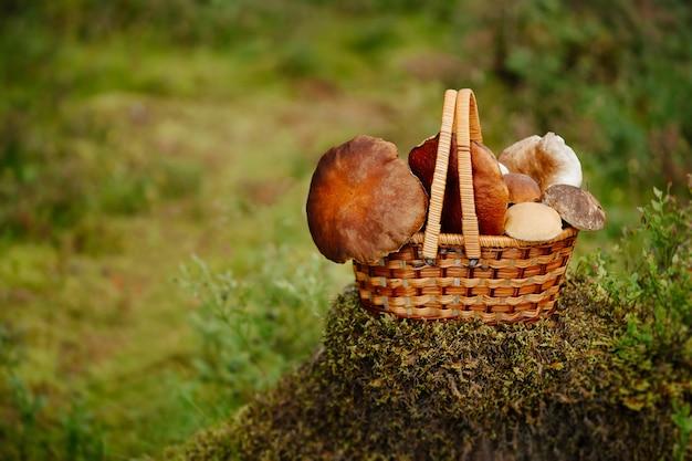 Корзина, полная съедобных грибов. свободное время для осеннего сбора экологически чистых продуктов питания.