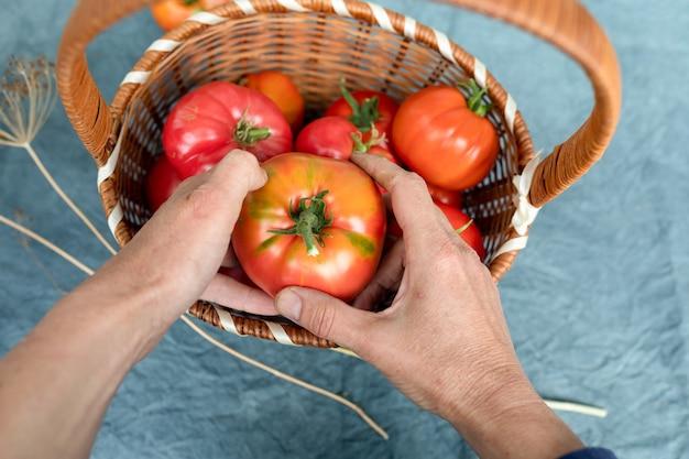 年配の女性の手に完熟トマトのバスケット