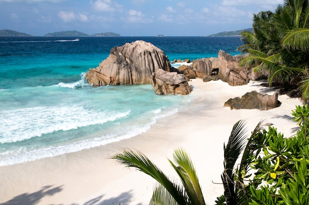 야자수, 큰 돌, 청록색 물과 파도가있는 해변