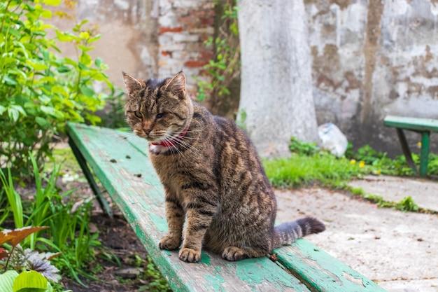 Избитый старый уличный кот без глаза, бездомный дикий кот с увечьями
