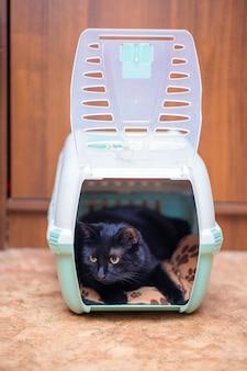 아름다운 검은 고양이가 운반 가방에 앉아 있습니다.