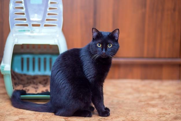 Красивый черный кот сидит возле своей сумки-переноски