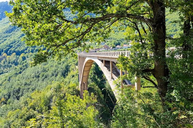 自然の中で美しい橋