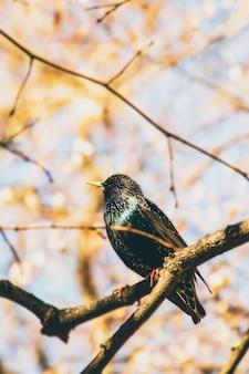 На дереве сидит красивая яркая птичка. птица и весна