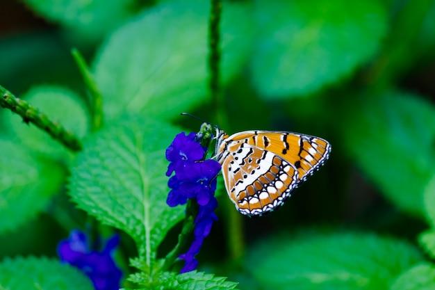 春の間に花の植物の美しい蝶