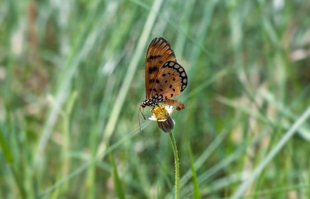 야생화 위에 앉아 있는 아름다운 나비