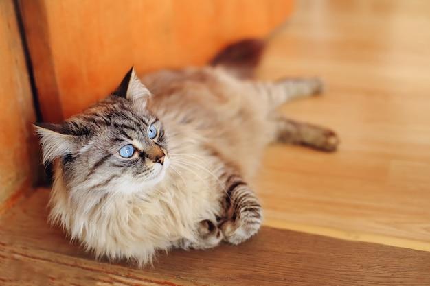 Красивый кот лежит на пороге и смотрит в сторону