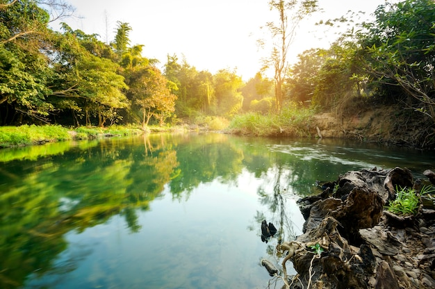 녹색 숲 배경, 캠핑 휴가 및 여행 개념으로 아름다운 맑은 호수