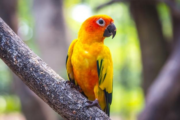 動物園の美しい色のオウム