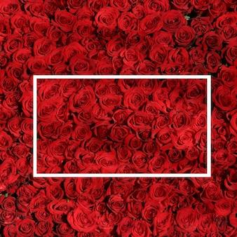 赤いバラの美しいデザイン