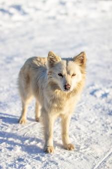 Красивая собака зимой стоит на снегу и смотрит. зимой собаке не холодно.