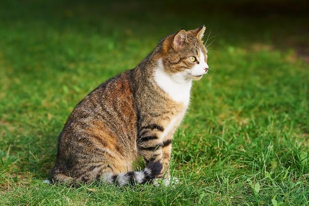 緑の芝生に、明るい黄色の目をした美しいトラ猫が座っています。
