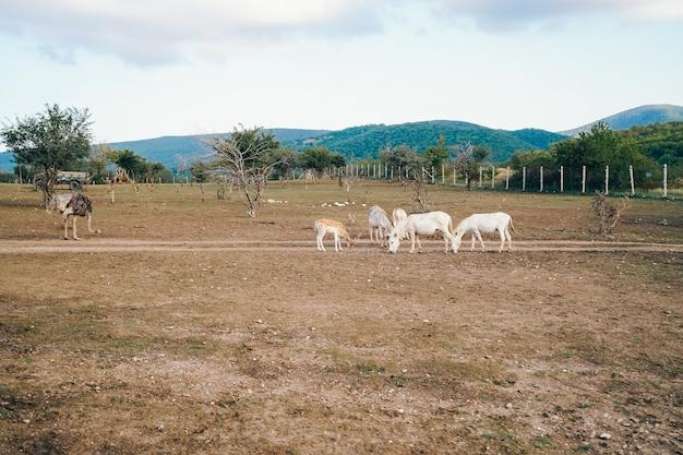 動物がいる美しい生態農場。野生動物がいる素敵な牧場。動物とのキャンプアンテロープパークサファリランチ