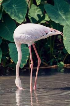 Красивый фламинго в суны