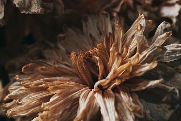 暗闇で死んだ美しい花