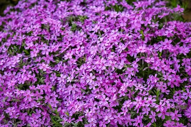 自然の公園の美しい花