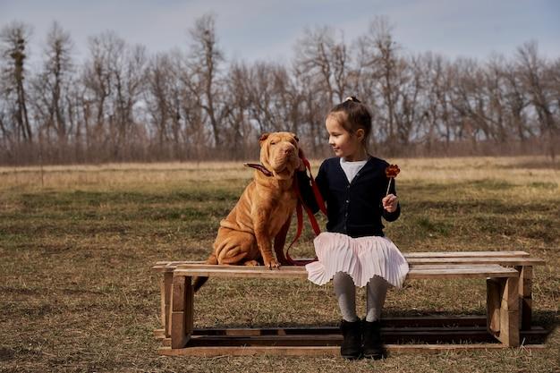 犬と一緒にベンチに座っているロリポップの美しい少女