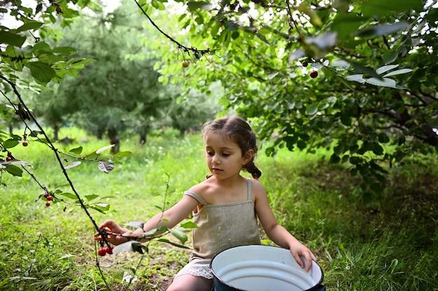 리넨 드레스를 입은 두 개의 땋은 머리를 가진 아름다운 소녀가 양동이에 앉아 과수원 시골집에서 체리를 모은다