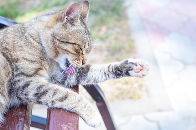 공원 벤치에 있는 아름다운 회색 얼룩 고양이가 혀로 발을 씻습니다. 프로필에 고양이의 초상화입니다. 청결, 위생, 건강. 여름에 거리에 노숙자 고양이입니다. 고양이의 날, 애완동물의 날.