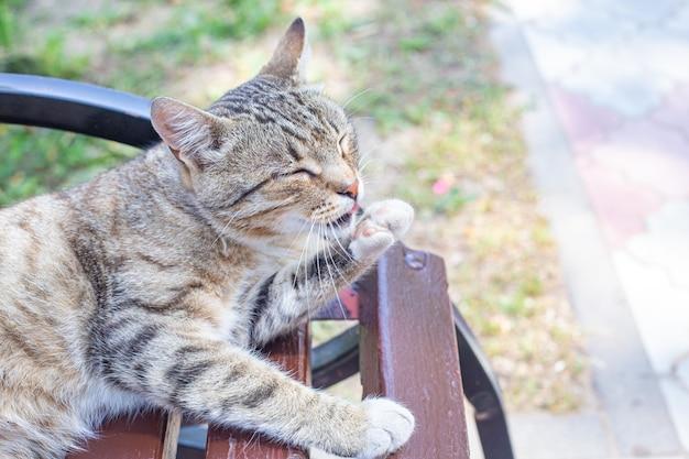 공원 벤치에 있는 아름다운 회색 얼룩 고양이가 혀로 발을 씻습니다. 거리 고양이의 초상화입니다. 청결, 위생, 건강. 여름에 거리에 노숙자 고양이입니다. 고양이의 날, 애완동물의 날.