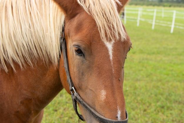 По лугу гуляет красивая лошадь. портрет лошади, коричневая лошадь.