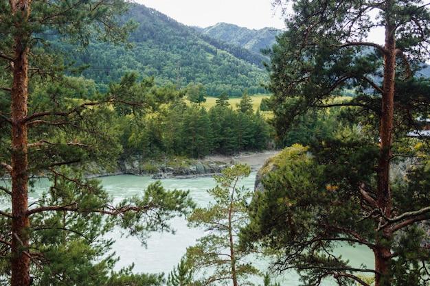 前景のアルタイ山脈に川と山々と松の木がある美しい風景