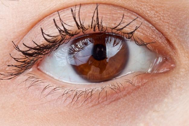 美しいマクロ人間の目