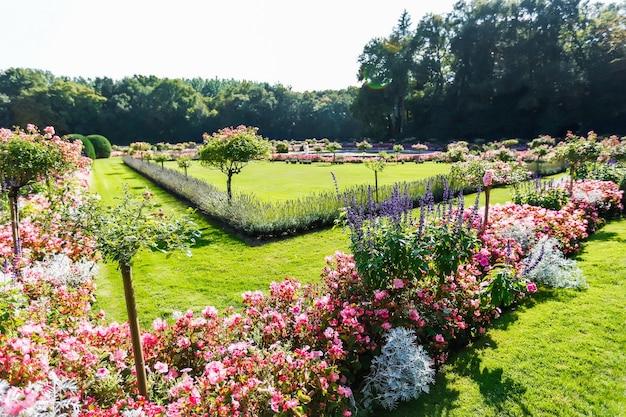 아름다운 여러 가지 빛깔의 꽃밭. 꽃의 인물.
