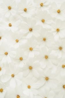 白いカモミール、デイジーの花の美しいパターン。花の質感やプリント。休日、結婚式、誕生日、記念日のコンセプト