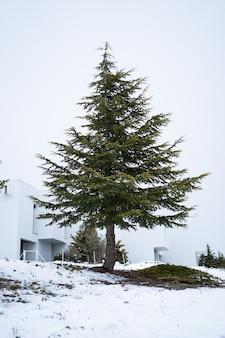 Красивая сосна посреди снега - вертикальное изображение