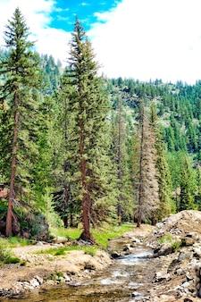 Красивый пейзаж леса с множеством елей и рекой под пасмурным небом.