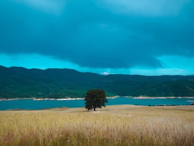 Красивый снимок одиночного зеленого дерева в поле у моря