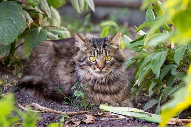 庭の地面に座っている大きな目を持つ美しい縞模様の猫