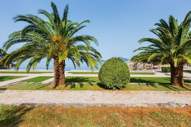 Milocer beach (montenegro, budva) 근처 야자수가있는 아름다운 여름 공원 아침보기