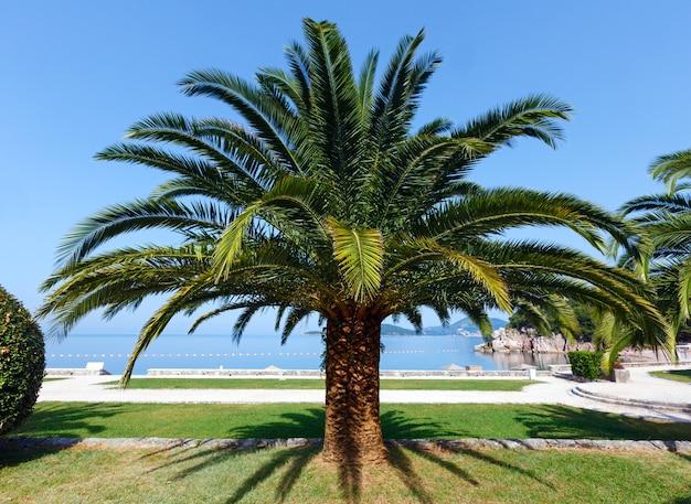 Красивый летний парк с утренним видом с пальмой возле пляжа милочер (черногория, будва)