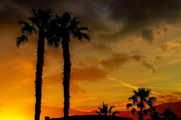 Красивый закат с оранжевыми и желтыми цветами в небе горы и пальмы в силуэте на расстоянии аризона.