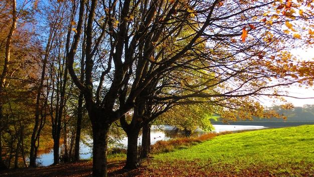 秋の湖のある公園の美しい景色