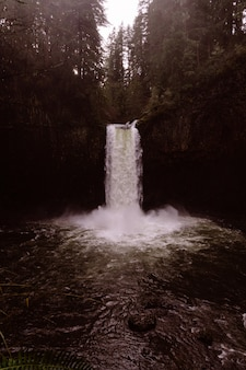鬱蒼とした森の中の美しい滝